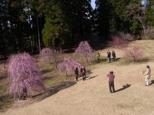 田上町梅林公園
